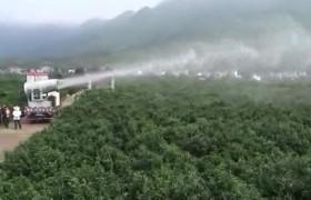 广西贺州大型果园林植保除虫